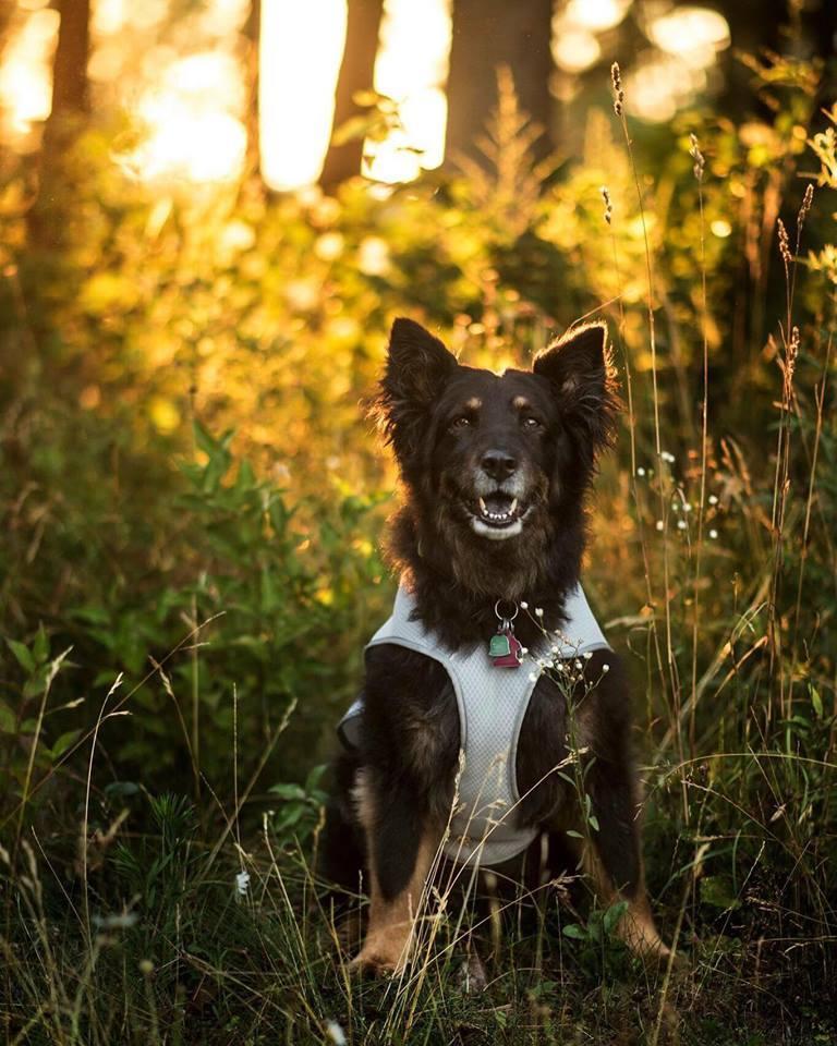 Dulcy Dog